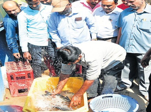 From today, get live fish at three more stalls