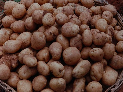 Simple potato extract can control obesity