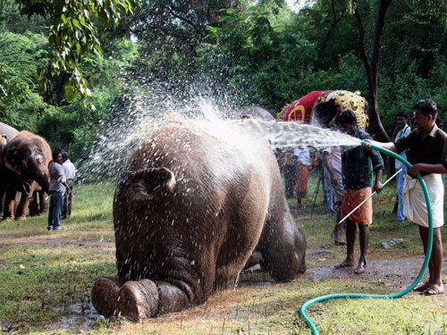 Mouth-organ playing elephant off to jumbo spa