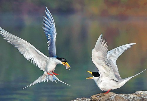 Birds evolved rapidly after dinosaurs went extinct