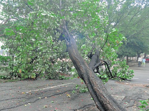 No public notice needed for felling 50 trees