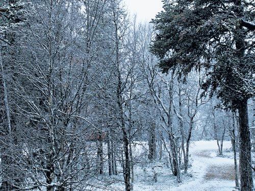 Finnish festivity