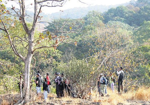 City forest gives a break from humdrum of Mumbai life