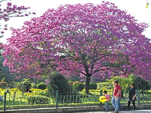 Lax security at Cubbon  Park worries walkers