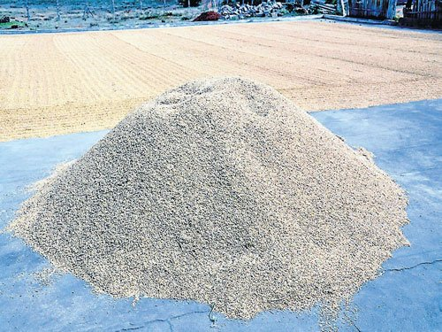 State may face shortage in rice as TN traders lure Ch'nagar farmers
