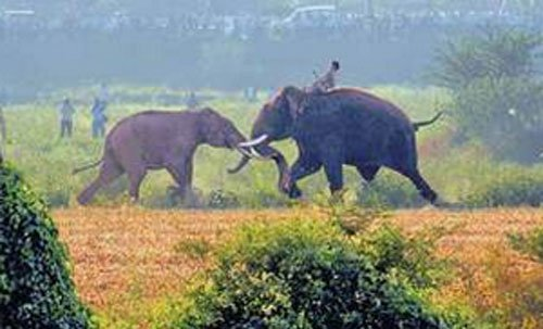 Mighty Balarama chases away wild elephant