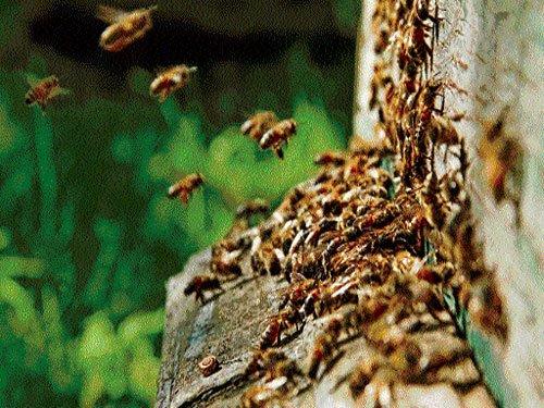 Dwindling bee population poses malnutrition risk