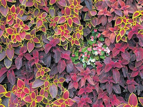 Foster a foliage garden