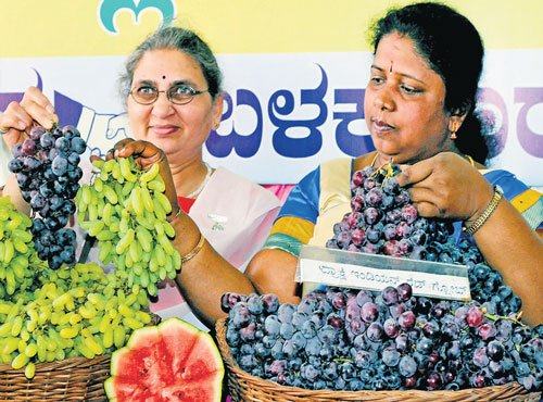Sumptuous array of watermelons, grapes at annual Hopcoms mela