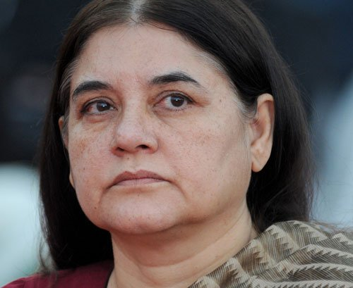 Maneka lashes out at Bt firms for 'GM crop menace'