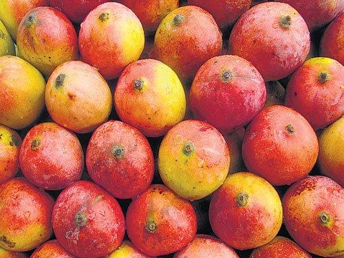 Mango production falls, prices rise