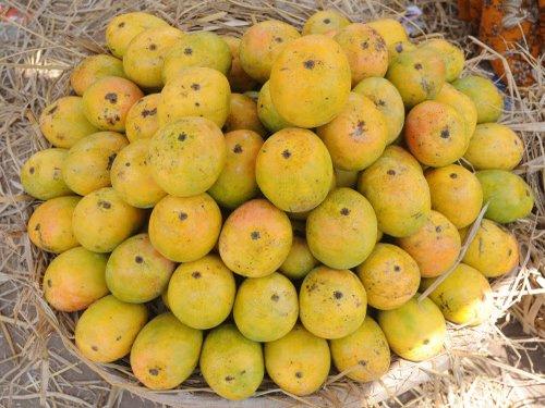 The mango mystique