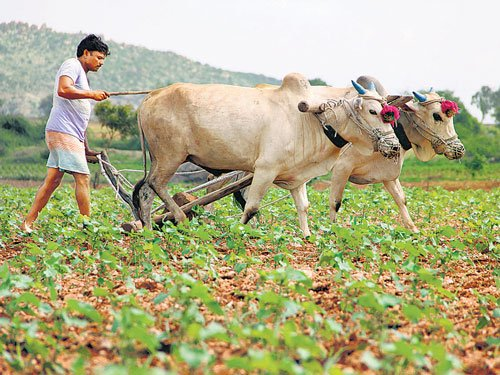 High growth ideas from India's lowly farmsteads