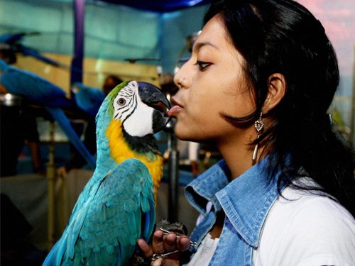 Birds have Fundamental Rights, can't be caged: HC