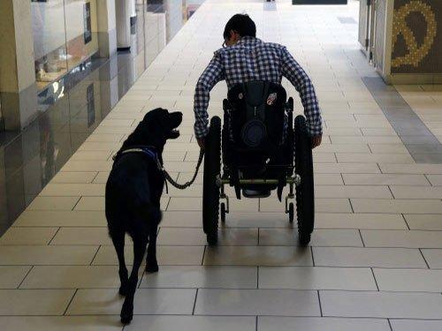Dog-human bonding older than thought
