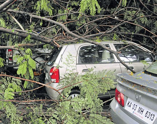 Rain uproots over 60 trees
