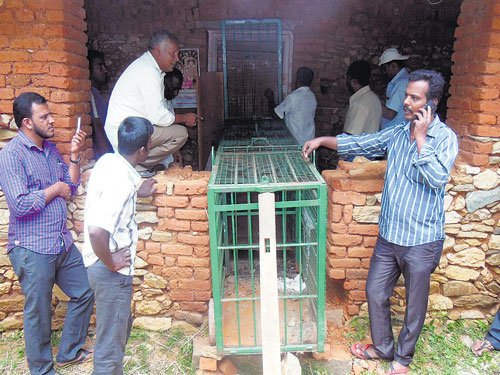 Leopard holed up at farmhouse in Hassan