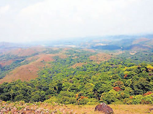 Rehab package for forest land  encroachers in the offing