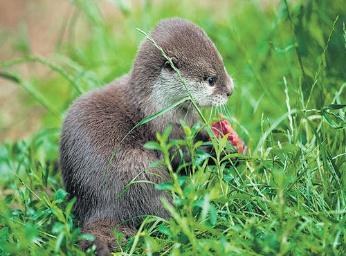 A safe haven for otters in TBriver bed