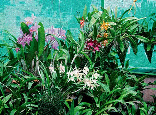Revelling in exotic blooms