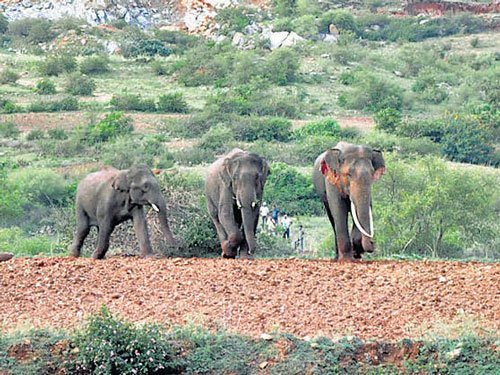 Farmers offer land for elephant corridor to avoid jumbo-size woes
