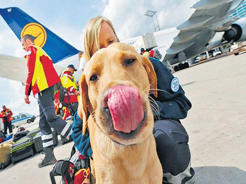 Dogs to sniff out cancer in UK trial