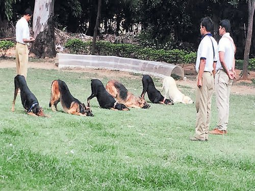 A peek into the lives of canine officers