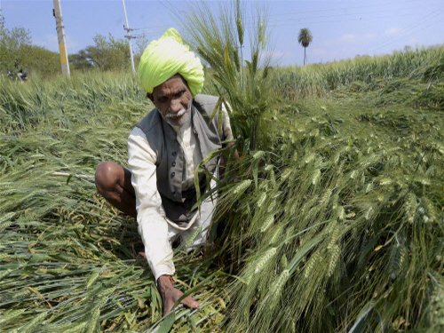 India's foodgrain output fell 4.66% in 2014-15