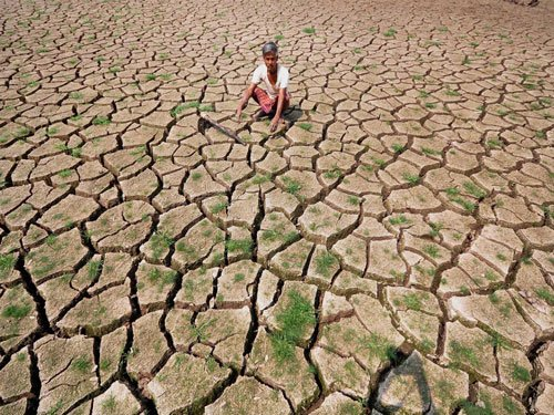 Twelve districts in State reeling under drought