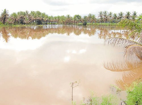 Showers put farmers  on rabi crop mode