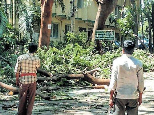 Gulmohar trees felled, residents cry foul