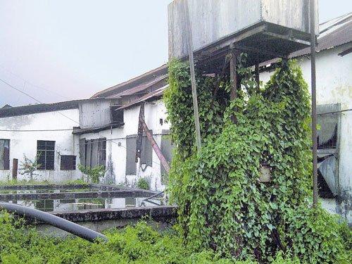 Dooars tea gardens in bad shape