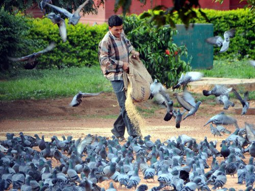 Feeding birds may spread diseases: study
