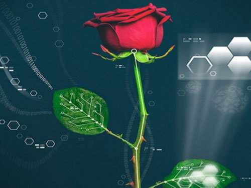 'Electronic' plants to herald new era for scientists