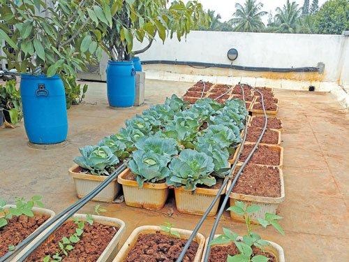 This Rooftop Garden Will Floor You For Sure Deccan Herald