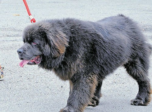 Civic workers seek law to tame negligent pet owners