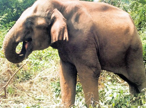 Pachyderm parched in  tug of war over ownership