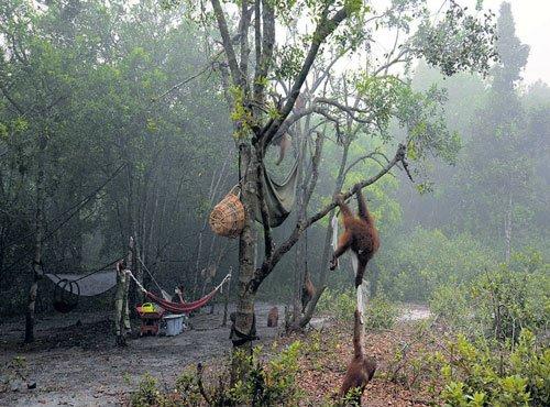 Conflict got bigger, bloodier; forest dept a lot wiser