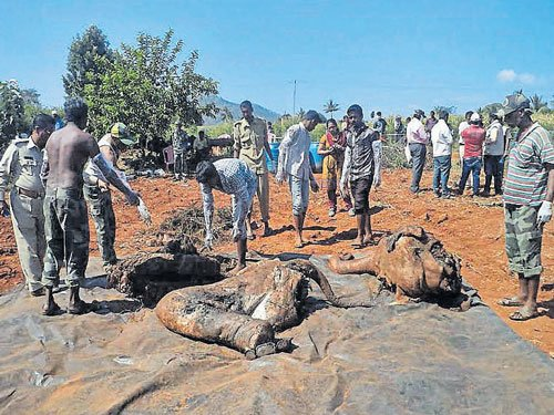 Forest personnel exhume elephant  carcass from open well in Kollegal