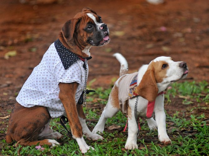 Dogs can copy each other's expressions