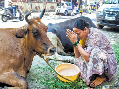 After selfie, here comes cowfie to raise awareness about cow