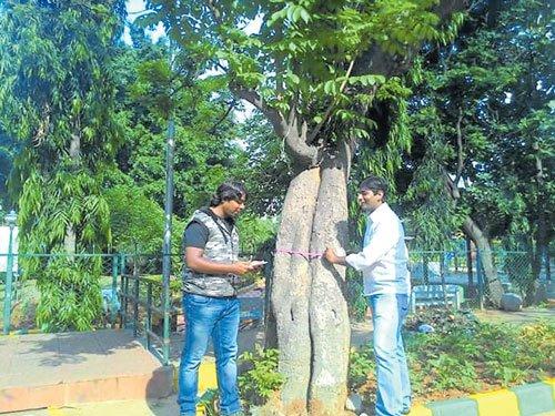 Activists conduct tree census on Kanakapura Rd, put details online