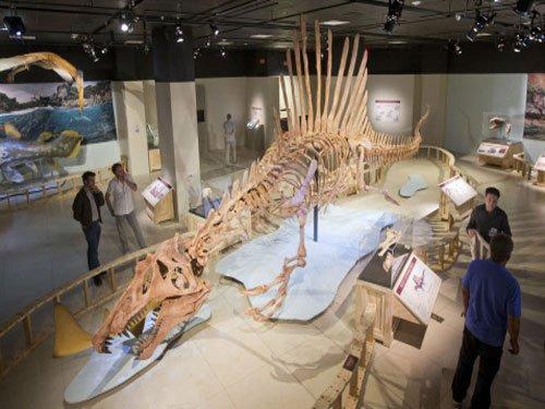 Rare dinosaur fossil fills in missing pieces of evolution