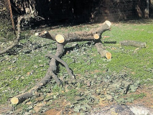 Felling of trees on school campus upsets students