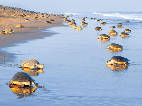 Save our turtles