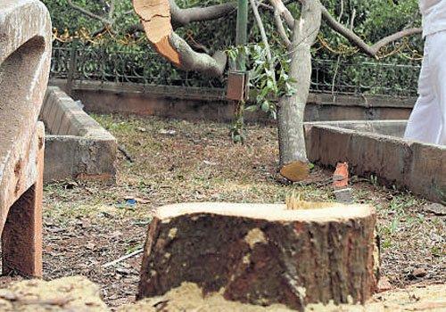 Sandalwood trees at Press Club stolen