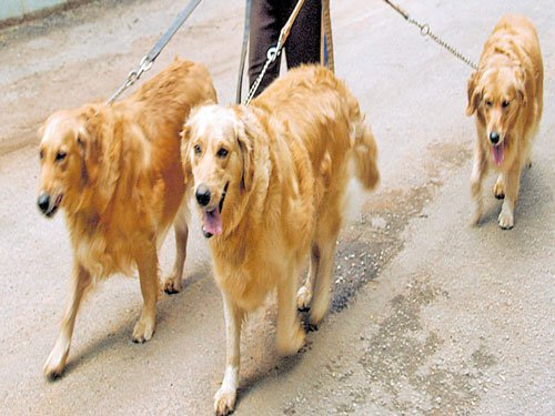 Rules to put a leash on pooping pooches awaiting govt approval