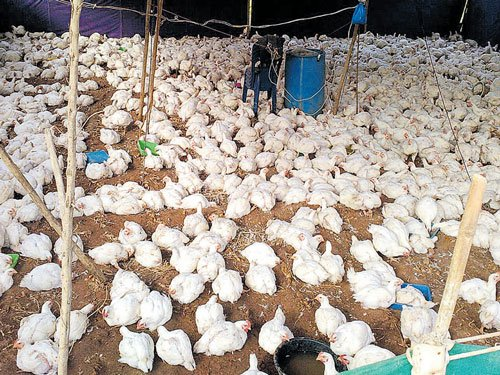 Ban on animal sacrifice leaves devotees disheartened