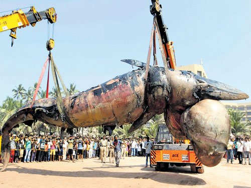 11-metre whale washes ashore on Juhu beach