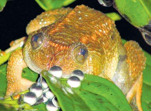 Maverick 'frog man'